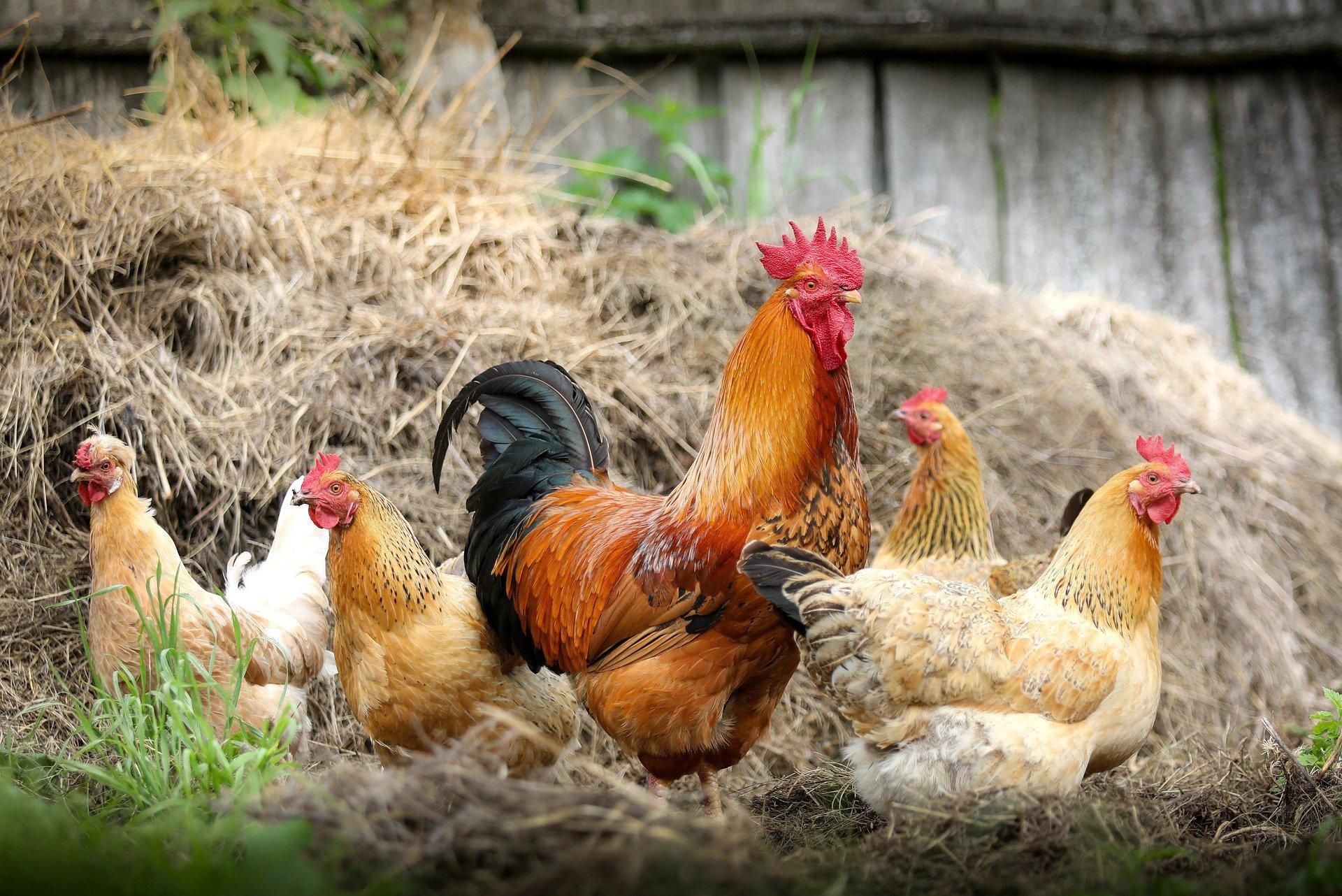 SC Poultry Festival